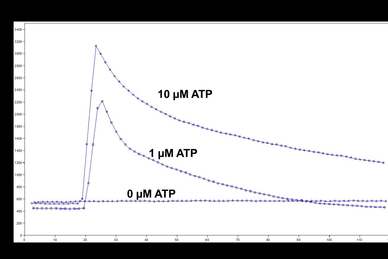 How to quantitate ATP induced calcium flux inside mammalian cells