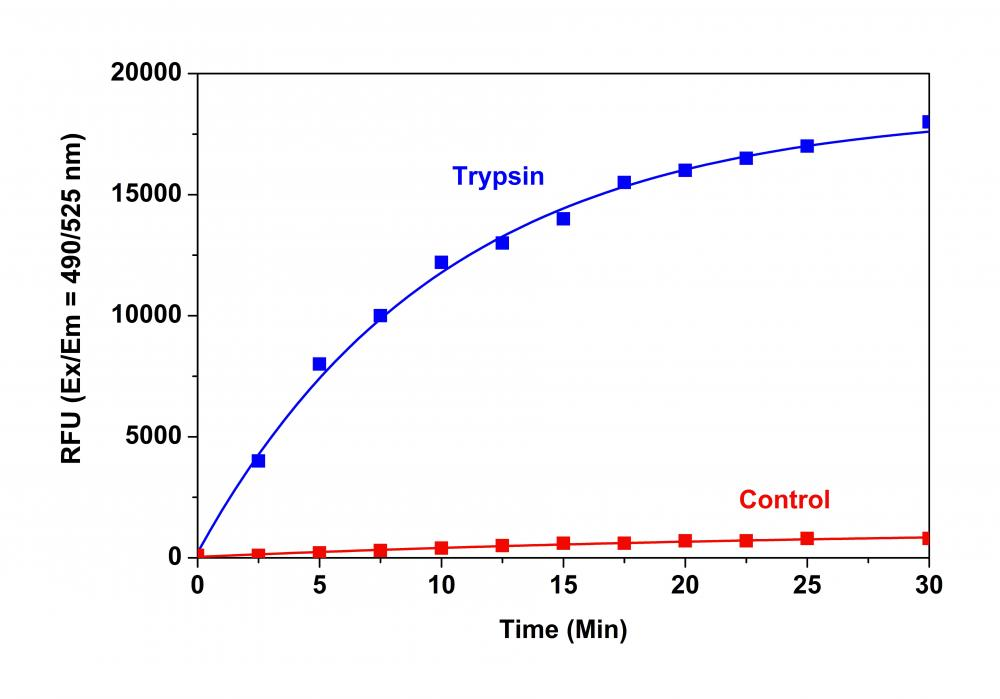 Trypsin protease activity was analyzed by Amplite™ Universal Fluorimetric Protease Activity Assay Kit. Protease substrate was incubated with 1 unit trypsin in the kit assay buffer. The control wells had protease substrate only (without trypsin). The fluorescence signal was measured starting from time 0 when trypsin was added. Samples were done in triplicates.