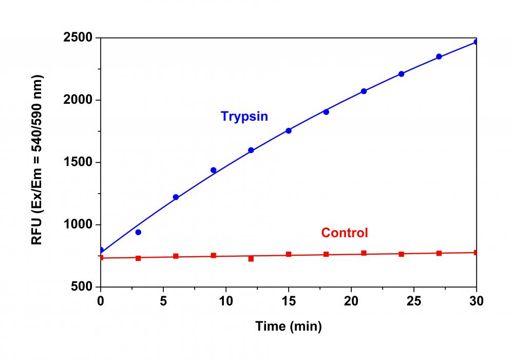 Trypsin protease activity was analyzed by using Amplite™ Universal Fluorimetric Protease Activity Assay Kit. Protease substrate was incubated with 3 units of trypsin. The control wells had protease substrate only (without trypsin). The fluorescence signal was measured starting from time 0 when trypsin was added. Samples were done in triplicate.