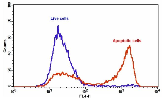 The detection of binding activity of Annexin V-iFluor™ 647 and phosphatidylserine in Jurkat cells. Jurkat cells were treated without (Blue) or with 20 µM staurosporine(Red) in a 37 °C, 5% CO2 incubator for 4-5 hours, and then dye loaded with Annexin V-iFluor™ 647 for 30 minutes. The fluorescence intensity of Annexin V-iFluor™ 647 was measured with a FACSCalibur (Becton Dickinson) flow cytometer using the FL4 channel.