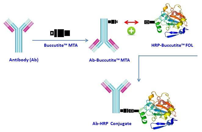 <p>The mechanism of Buccutite&trade; bioconjugation system used for Buccutite&trade; Peroxidase Antibody Conjugation Kit (Cat# 5503).</p>