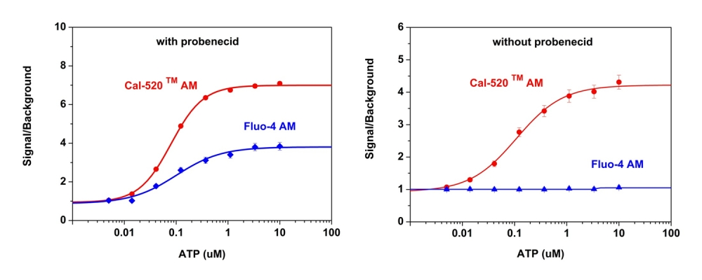 ATP-stimulated calcium responses of endogenous P2Y receptor in CHO-K1 cells incubated with Cal-520™ AM (red curve), or Fluo-4 AM (blue curve) respectively with (left) or without probenecid (right) under the same conditions. CHO-K1 cells were seeded overnight at 50,000 cells per 100 µL per well in a Costar black wall/clear bottom 96-well plate. 100 µL of 5 µM Fluo-4 AM or Cal 520™ AM in HHBS (with or without probenecid) was added into the cells, and the cells were incubated at 37 °C for 1 hour. ATP (50 μL/well) was added using FlexSation to achieve the final indicated concentrations.