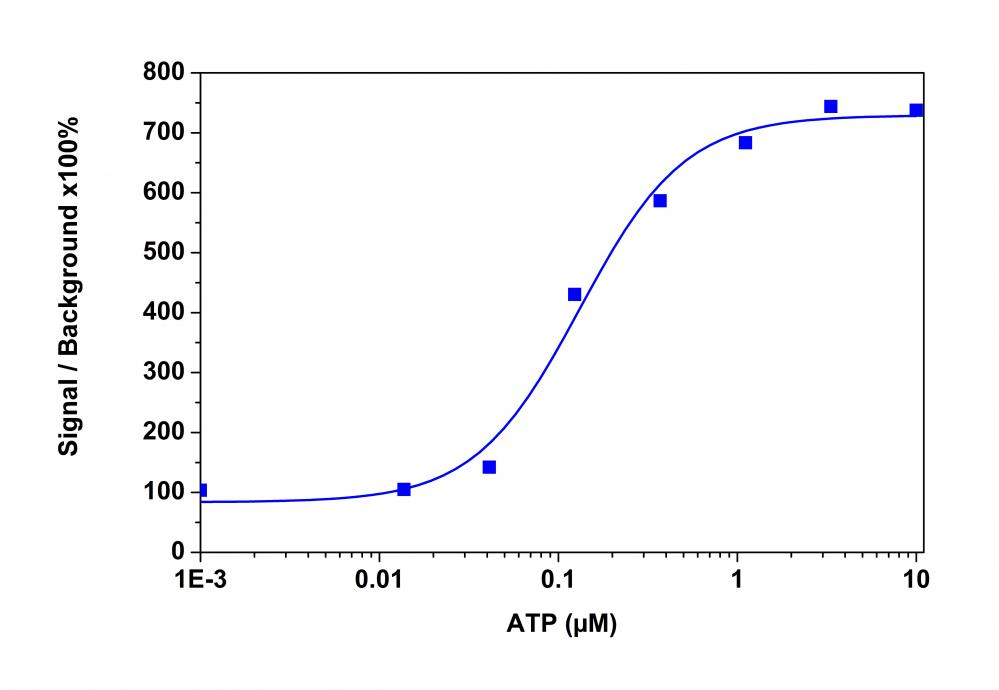 <p>ATP&nbsp;dose response was measured in CHO-K1 cells with Calbryte&trade; 590 AM. CHO-K1 cells were seeded overnight at 50,000 cells/100 &micro;L/well in a 96-well black wall/clear bottom costar plate. 100 &micro;L of 10 &micro;g/ml Calbryte&trade; 590 AM in HH Buffer with probenecid was added and incubated for 60 min at 37&deg;C. Dye loading solution was then removed and replaced with 200 &micro;L HH Buffer/well. ATP&nbsp;(50 &micro;L/well) was added by FlexStation 3 to achieve the final indicated concentrations.</p>