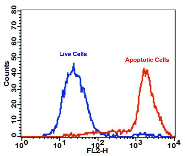 Cell Meter™ PE-Annexin V Binding Apoptosis Assay Kit