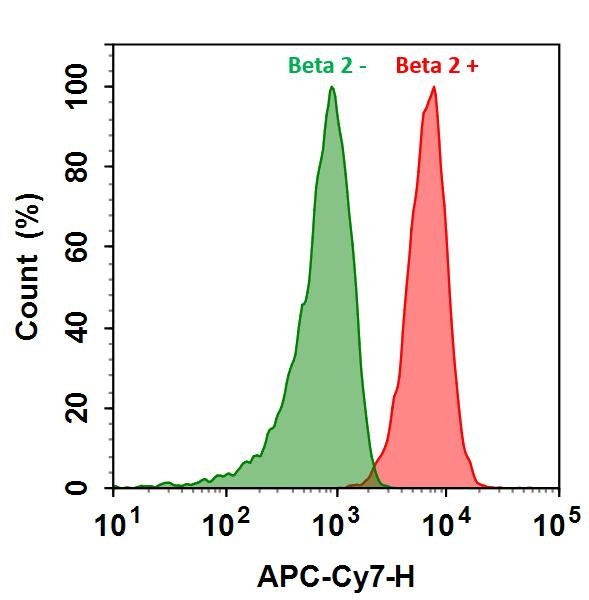 <p>HL-60 cells were incubated with (Red, +) or without (Green, -) Anti-beta 2 rabbit antibody (Beta 2), followed by Cy7&reg; goat anti-rabbit IgG conjugate. The fluorescence signal was monitored using ACEA NovoCyte flow cytometer in APC-Cy7 channel.</p>