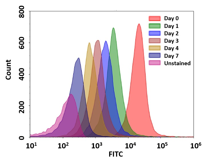 Cell tracking assay using CytoTell™ UltraGreen. Jurkat cells (~2x10^6 cells/mL) were stained with CytoTell™ UltraGreen on Day 0. Cells were passed serially at 1:1 ratio for 7 days. Fluorescence intensity was measured using ACEA NovoCyte flow cytometer in FITC channel. Successive generations were represented by different colors.