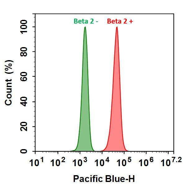 <p>HL-60 cells were incubated with (Red, +) or without (Green, -) Anti-beta 2 rabbit antibody (Beta 2), followed by iFluor&trade; 405 goat anti-rabbit IgG conjugate. The fluorescence signal was monitored using ACEA NovoCyte flow cytometer in Pacific Blue channel.</p>