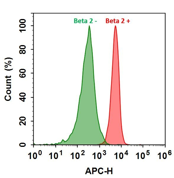 <p>HL-60 cells were incubated with (Red, +) or without (Green, -) Anti-beta 2 rabbit antibody (Beta 2), followed by iFluor™ 700 goat anti-rabbit IgG conjugate. The fluorescence signal was monitored using ACEA NovoCyte flow cytometer in APC channel.</p>