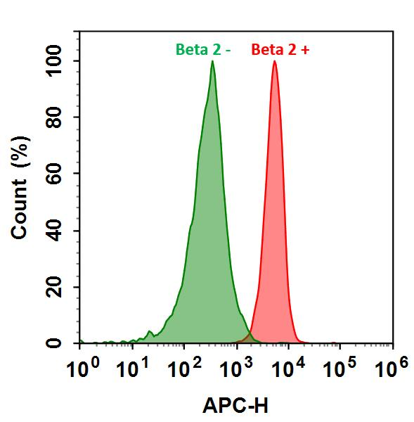 <p>HL-60 cells were incubated with (Red, +) or without (Green, -) Anti-beta 2 rabbit antibody (Beta 2), followed by iFluor&trade; 700 goat anti-rabbit IgG conjugate. The fluorescence signal was monitored using ACEA NovoCyte flow cytometer in APC channel.</p>