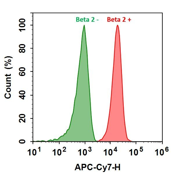 <p>HL-60 cells were incubated with (Red, +) or without (Green, -) Anti-beta 2 rabbit antibody (Beta 2), followed by iFluor&trade; 750 goat anti-rabbit IgG conjugate. The fluorescence signal was monitored using ACEA NovoCyte flow cytometer in APC-Cy7 channel.</p>