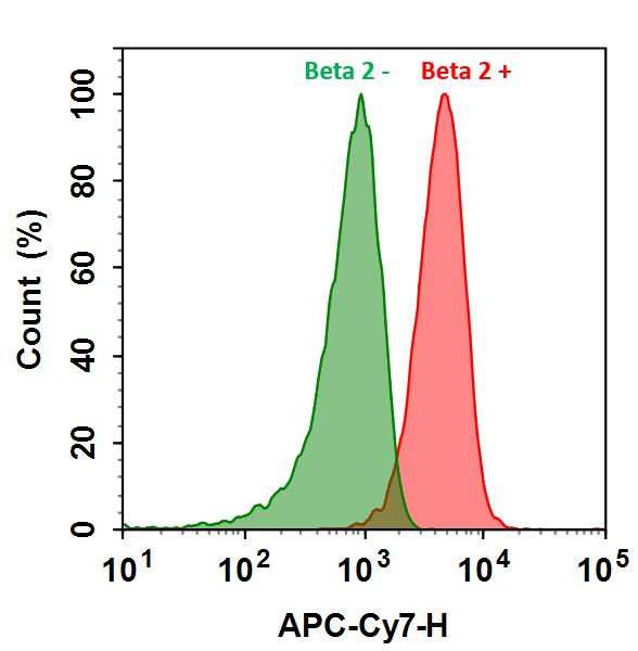 <p>HL-60 cells were incubated with (Red, +) or without (Green, -) Anti-beta 2 rabbit antibody (Beta 2), followed by iFluor&trade; 790 goat anti-rabbit IgG conjugate. The fluorescence signal was monitored using ACEA NovoCyte flow cytometer in APC-Cy7 channel.</p>