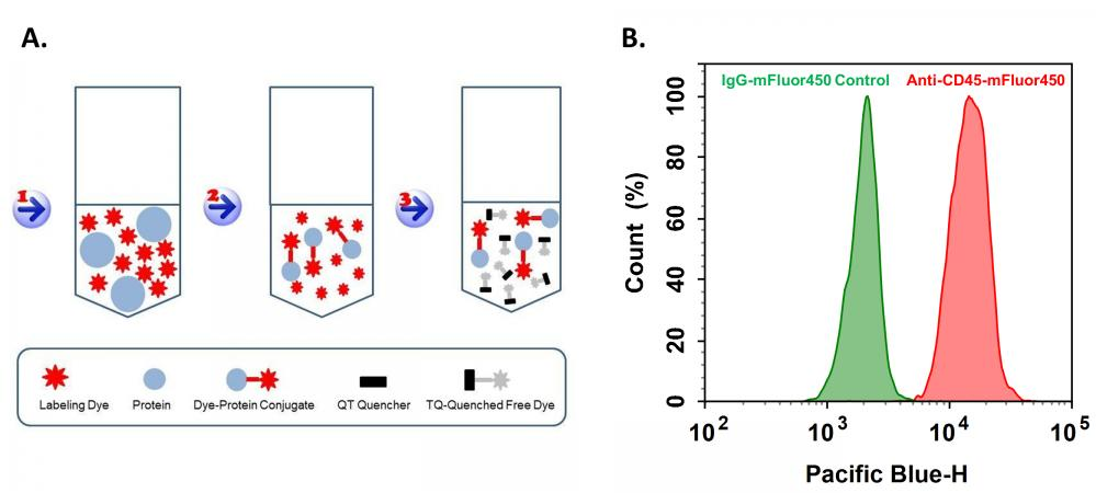 <p>Expression of CD45 in differentiated HL-60 cells were quantified using labeled anti-CD45 antibody by ReadiLinkTM Rapid mFluorTM Violet 450 Antibody Labeling Kit (Cat# 1100). <strong>A. </strong>ReadiLink™ Kit Labeling Principle. <strong>B. </strong>HL-60 cells were with 1.25% DMSO for 4 days to differentiate. The live cells were incubated with 1 µg/ml anti-CD45-mFluor450 or IgG-mFluor450 control and analyzed by NovoCyte.</p>