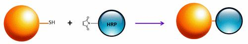 <p>ReadiUse™ Preactivated HRP maleimide can be used to label thiol-containing proteins in the manner shown. The reaction is a simple 1-2 hours mixing and in most cases does not require further purification before use.</p>