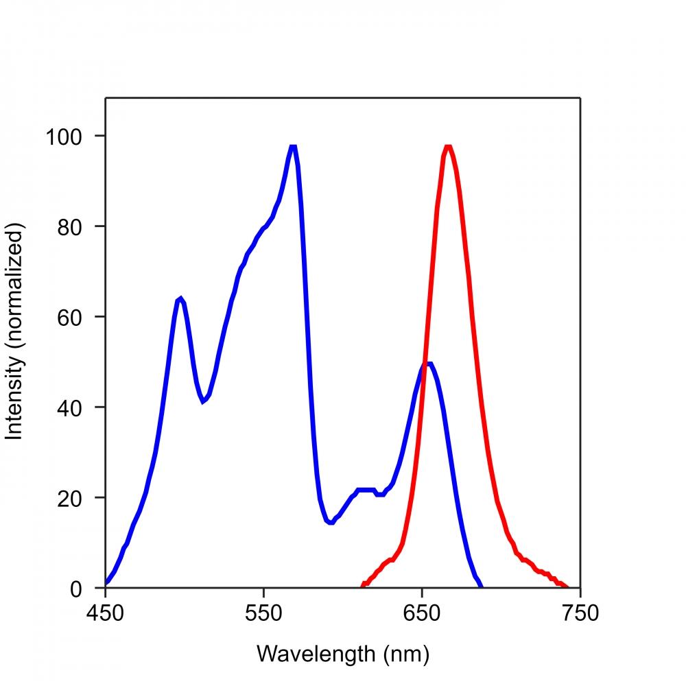 <p>Spectrum for RPE-iFluor 647</p>
