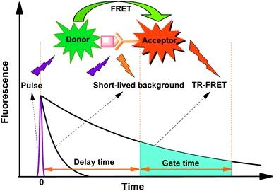 <p>Time-resolved fluorescence energy transfer&nbsp;(TR-FRET) is the practical combination of&nbsp;time-resolved fluorometry (TRF)&nbsp;combined with&nbsp;F&ouml;rster resonance energy transfer&nbsp;(FRET) that offers a powerful tool for drug discovery researchers. TR-FRET combines the low&nbsp;background&nbsp;aspect of TRF with the&nbsp;homogeneous assay&nbsp;format of FRET. The resulting assay provides an increase in flexibility, reliability and sensitivity in addition to higher throughput and fewer false positive/false negative results. FRET involves two&nbsp;fluorophores, a donor (such as trFluor Eu and trFluor Tb) and an acceptor.&nbsp;Excitation of the donor by an energy source (e.g. flash lamp or laser) produces an energy transfer to the acceptor if the two are within a given proximity to each other. The acceptor in turn emits light at its characteristic wavelength. The FRET aspect of the technology is driven by several factors, including spectral overlap and the proximity of the fluorophores involved, wherein energy transfer occurs only when the distance between the donor and the acceptor is small enough. In practice, FRET systems are characterized by the&nbsp;F&ouml;rster's radius&nbsp;(R<sub>0</sub>): the distance between the fluorophores at which FRET efficiency is 50%. For many FRET parings, R<sub>0</sub>&nbsp;lies between 20 and 90 &Aring;, depending on the acceptor used and the spatial arrangements of the fluorophores within the assay.&nbsp;Through measurement of this energy transfer, interactions between&nbsp;biomolecules&nbsp;can be assessed by coupling each partner with a fluorescent label and detecting the level of energy transfer. Acceptor emission as a measure of energy transfer can be detected without needing to separate bound from unbound assay components (e.g. a filtration or wash step) resulting in reduced assay time and cost.</p>