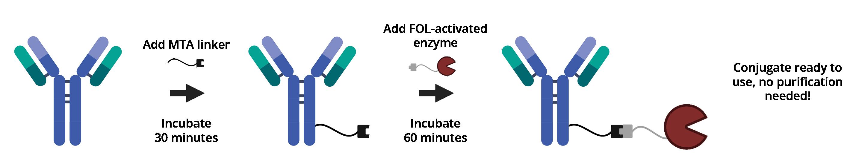 BuccutiteWorkflow