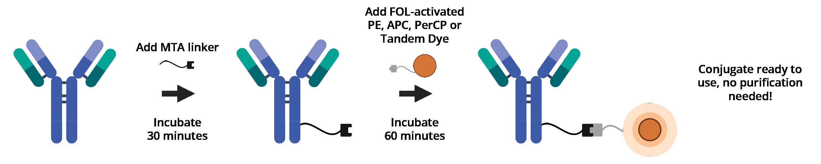 BuccutiteRapidWorkflow